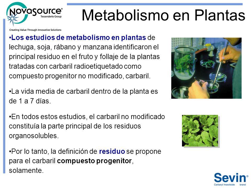 Metabolismo en Plantas