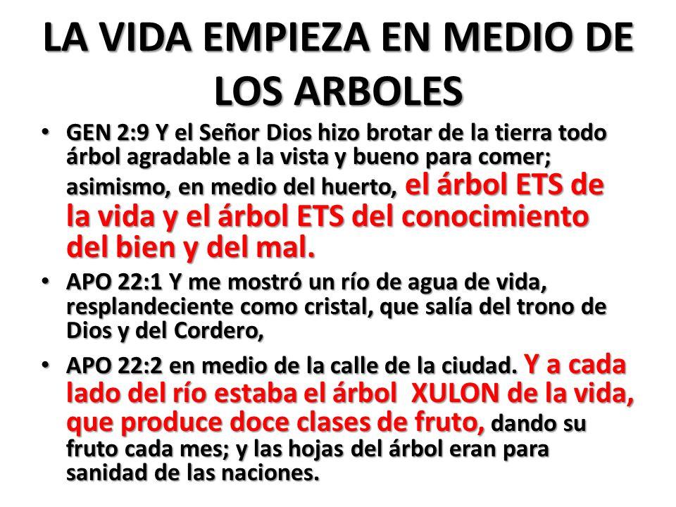 LA VIDA EMPIEZA EN MEDIO DE LOS ARBOLES