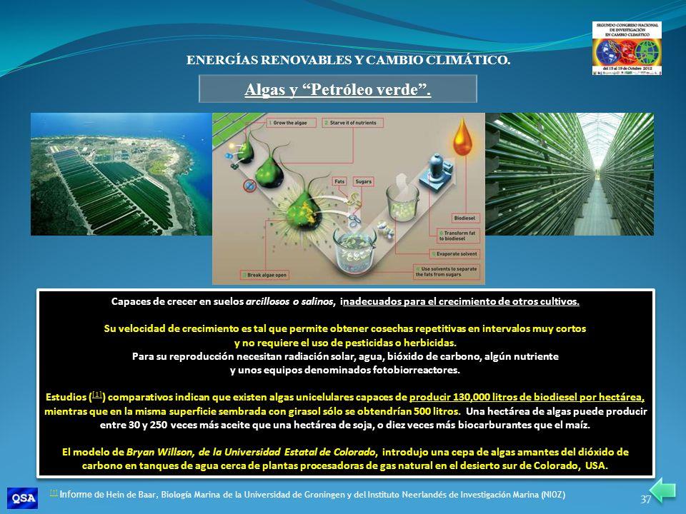 Algas y Petróleo verde .