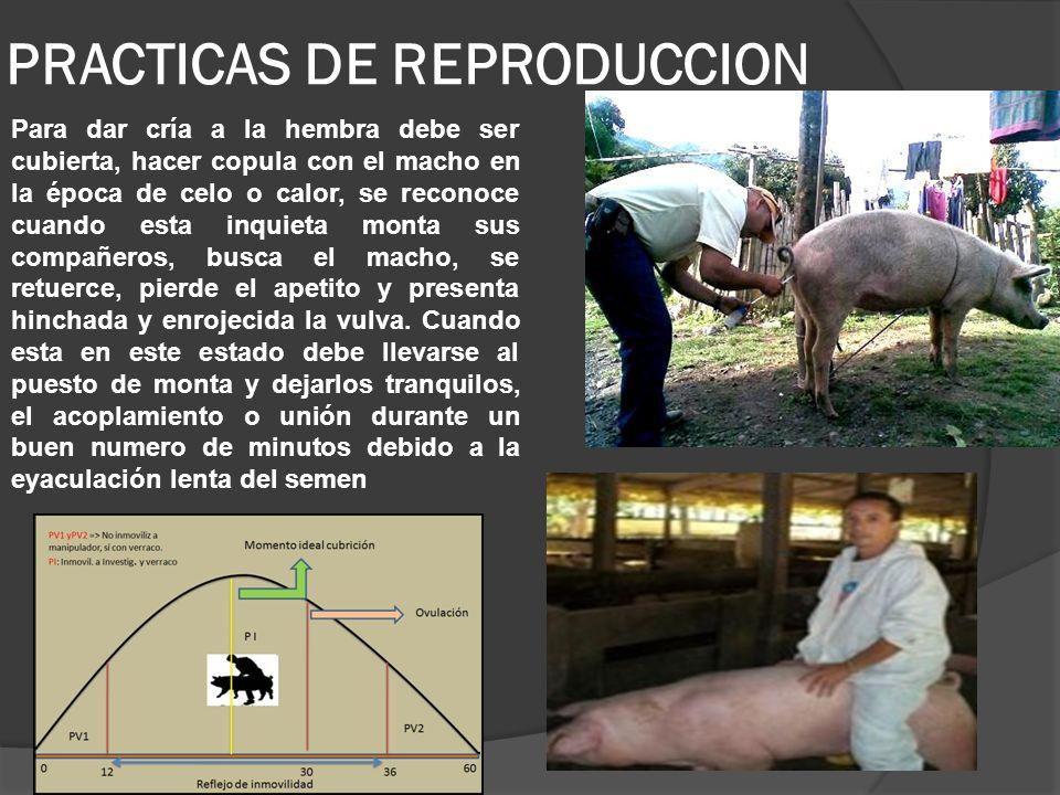 PRACTICAS DE REPRODUCCION