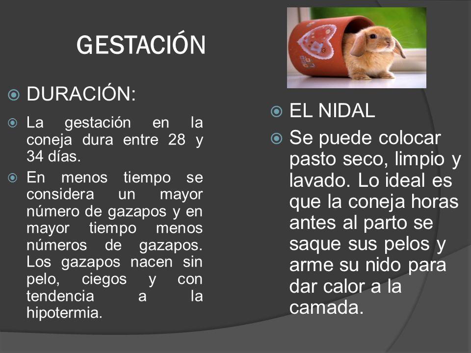 GESTACIÓN DURACIÓN: EL NIDAL