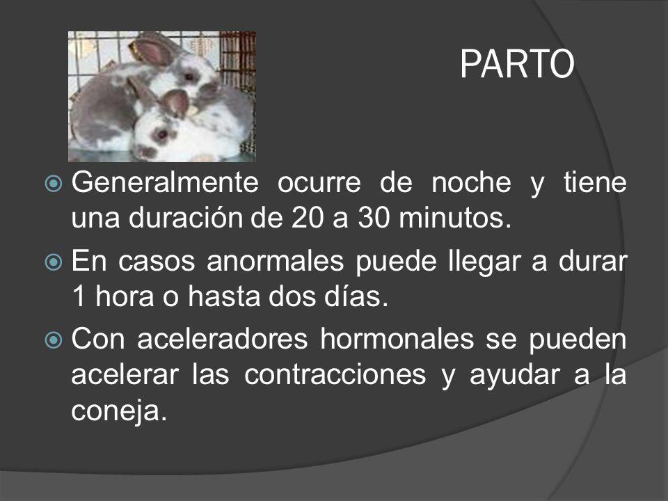 PARTO Generalmente ocurre de noche y tiene una duración de 20 a 30 minutos. En casos anormales puede llegar a durar 1 hora o hasta dos días.