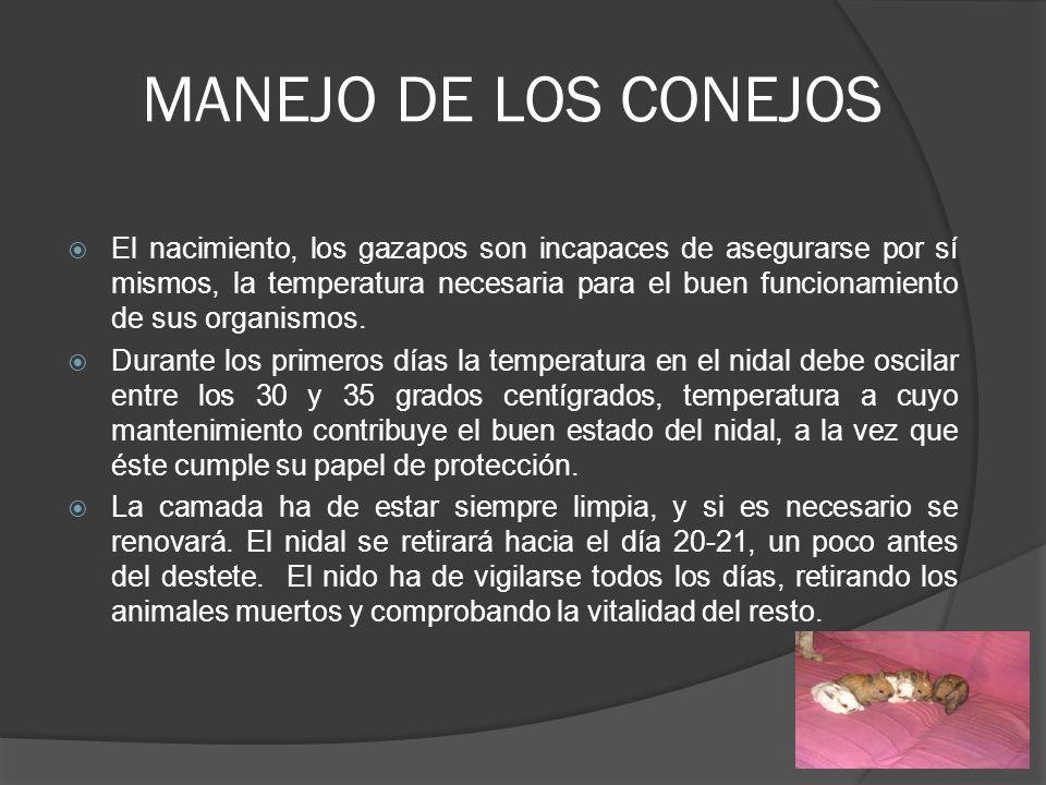MANEJO DE LOS CONEJOS