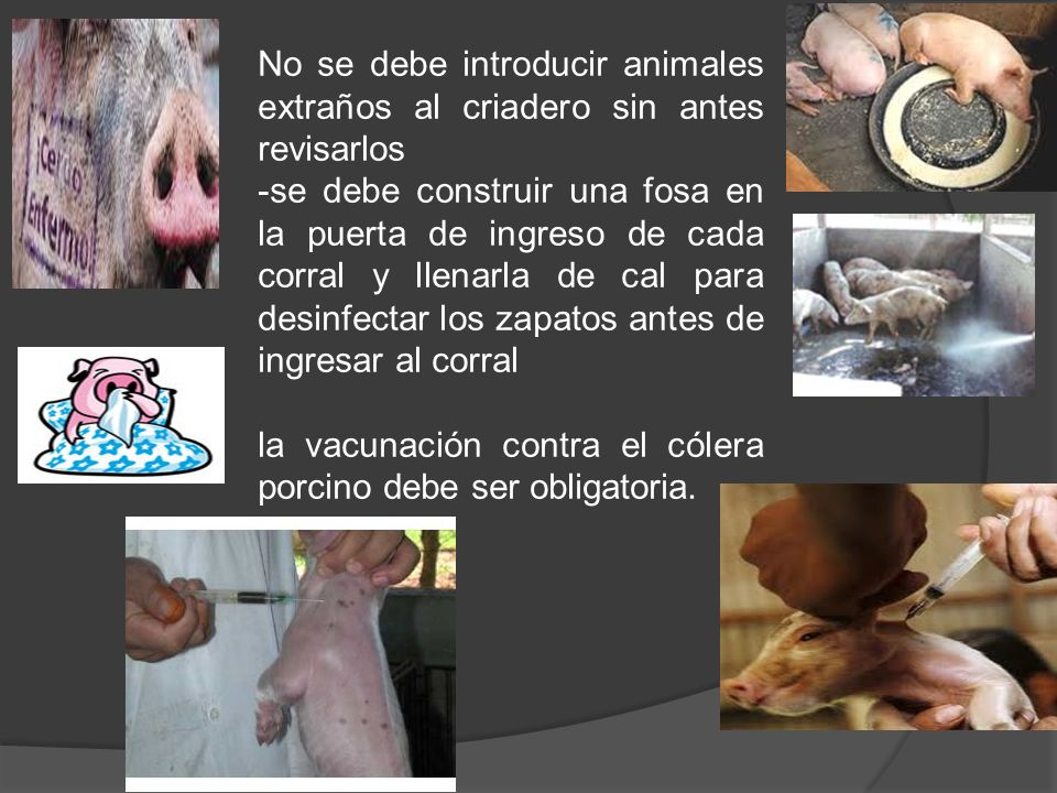 No se debe introducir animales extraños al criadero sin antes revisarlos