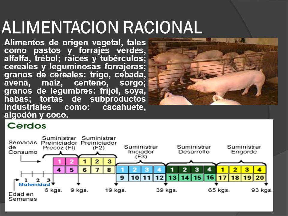 ALIMENTACION RACIONAL