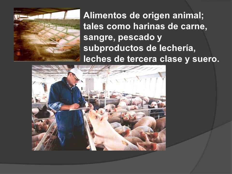 Alimentos de origen animal; tales como harinas de carne, sangre, pescado y subproductos de lechería, leches de tercera clase y suero.