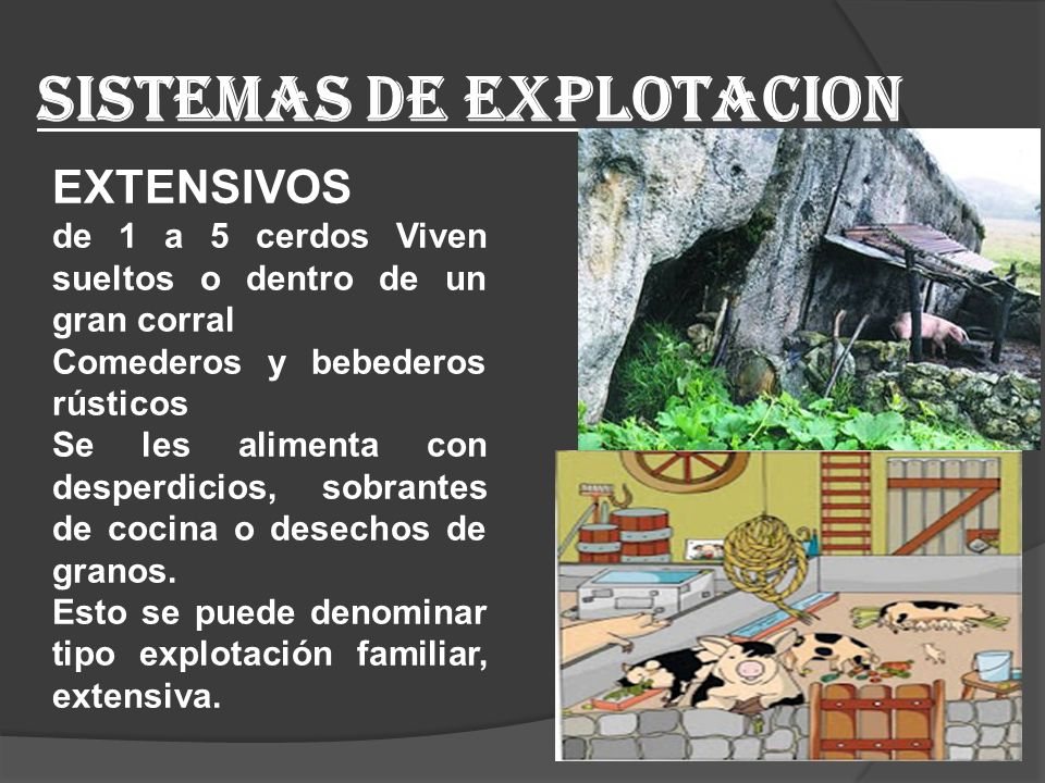 SISTEMAS DE EXPLOTACION