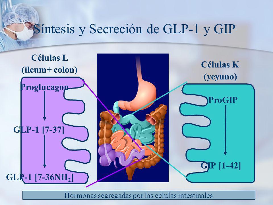 Síntesis y Secreción de GLP-1 y GIP