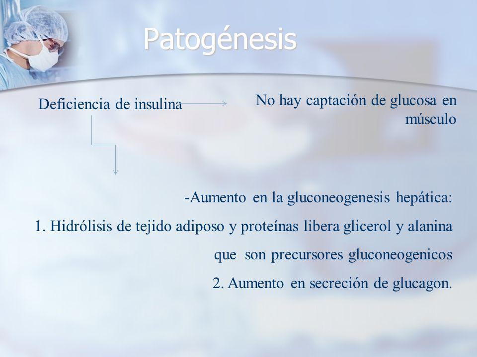 Patogénesis No hay captación de glucosa en músculo