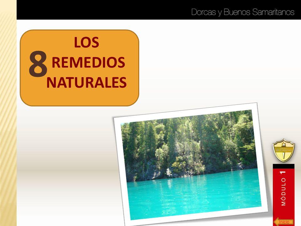 LOS REMEDIOS NATURALES 8 Inicio