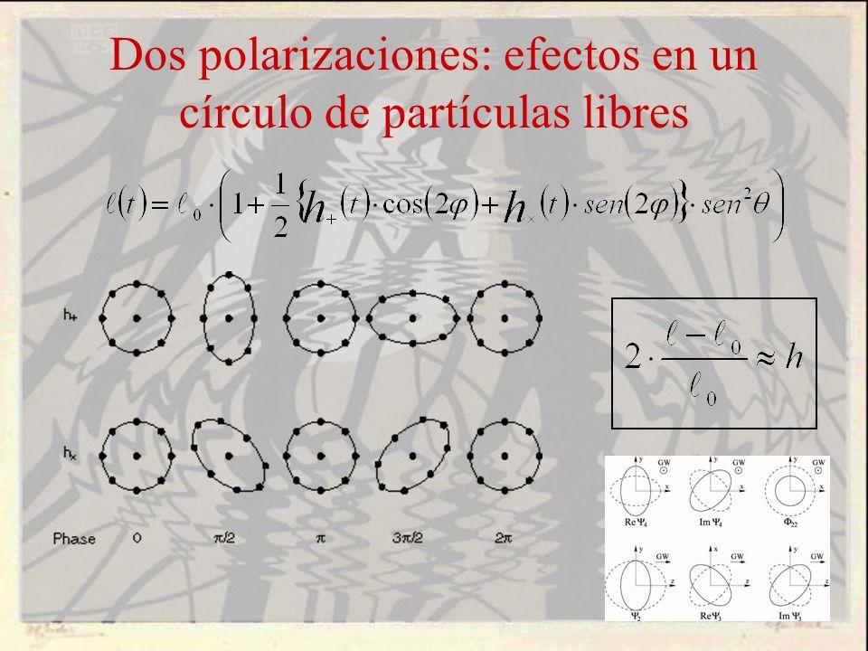 Dos polarizaciones: efectos en un círculo de partículas libres