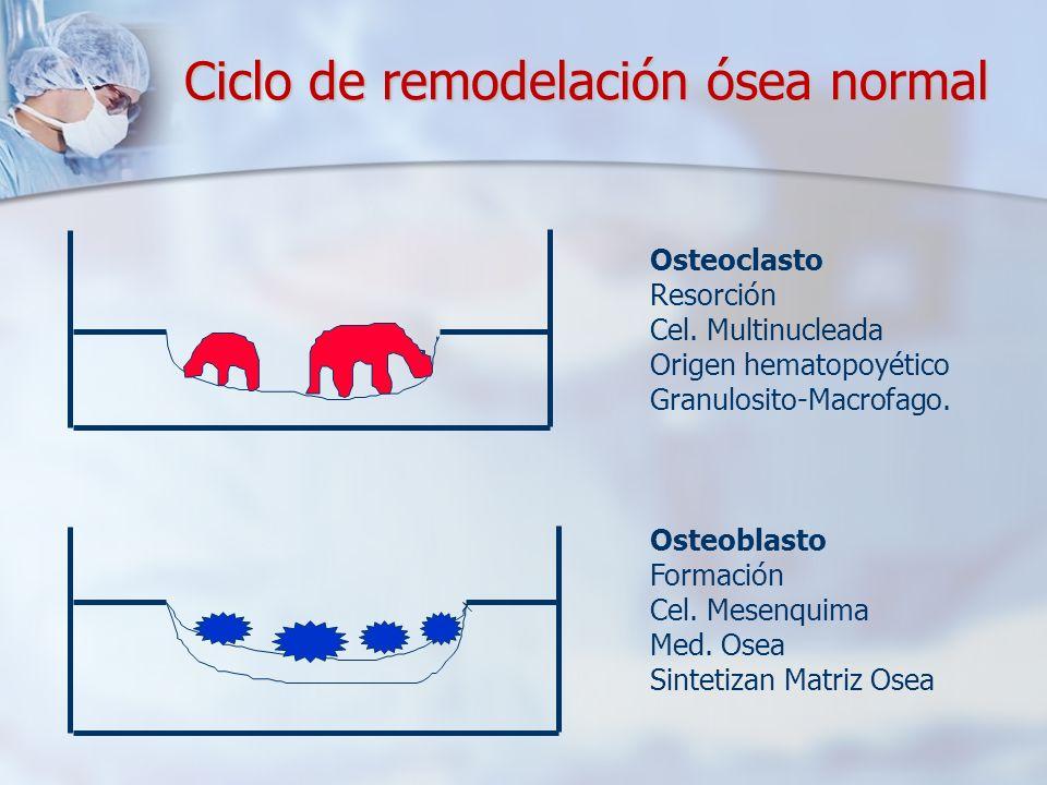 Ciclo de remodelación ósea normal