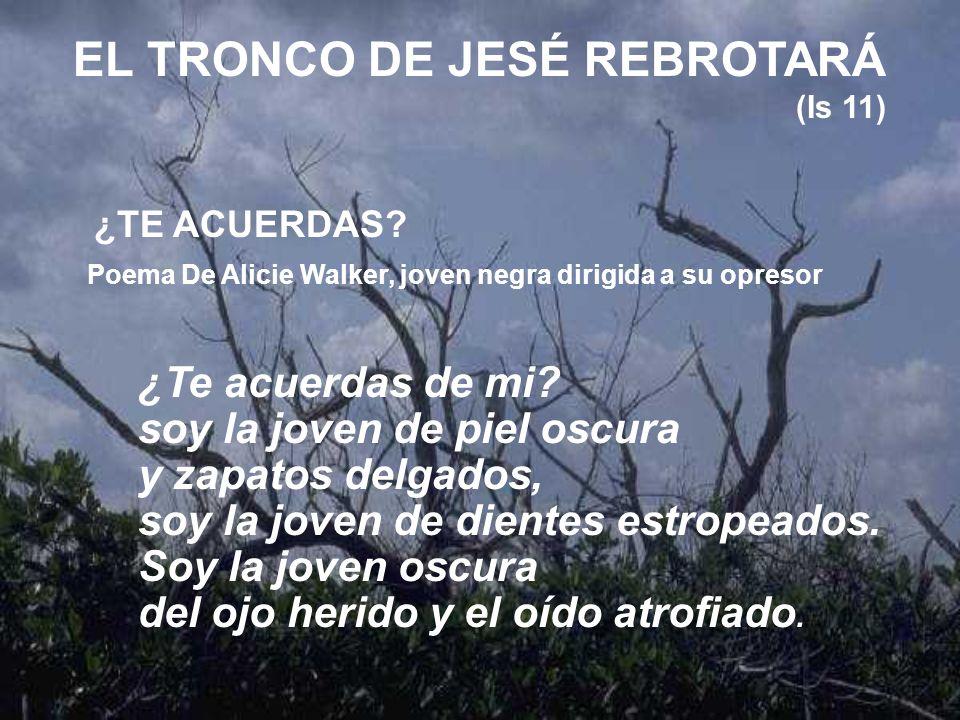 EL TRONCO DE JESÉ REBROTARÁ (Is 11)