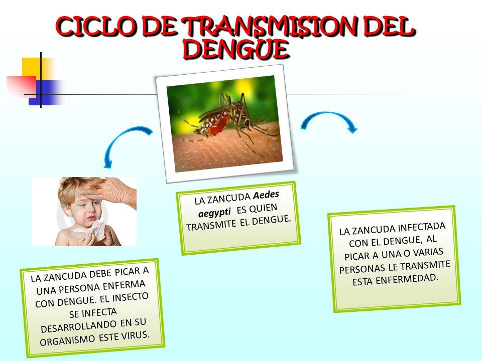 CICLO DE TRANSMISION DEL DENGUE