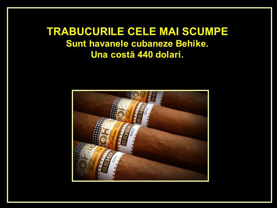 TRABUCURILE CELE MAI SCUMPE Sunt havanele cubaneze Behike.