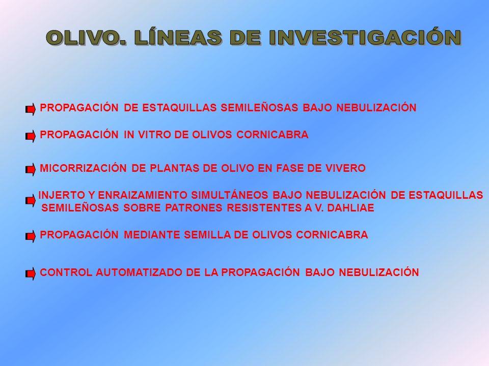 OLIVO. LÍNEAS DE INVESTIGACIÓN