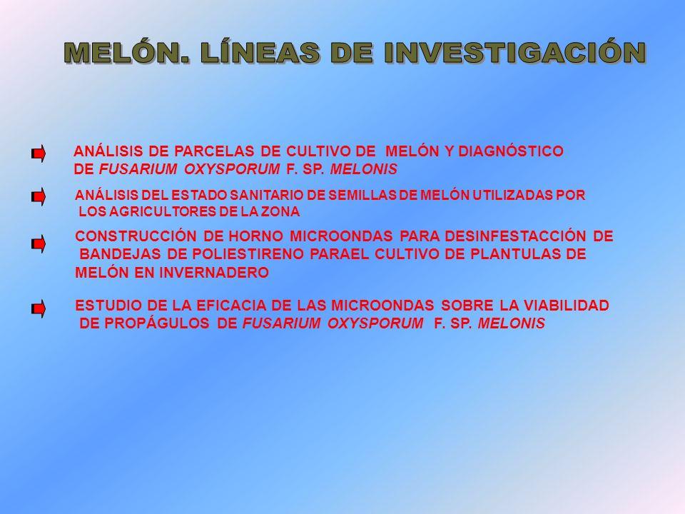 MELÓN. LÍNEAS DE INVESTIGACIÓN