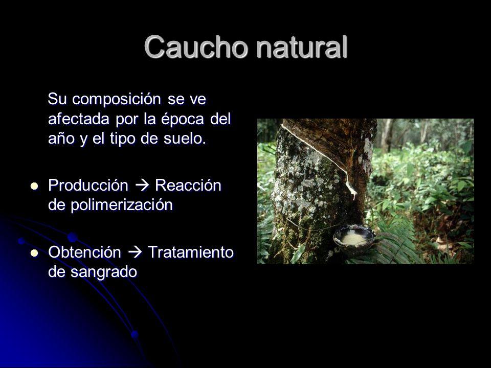 Caucho natural Su composición se ve afectada por la época del año y el tipo de suelo. Producción  Reacción de polimerización.