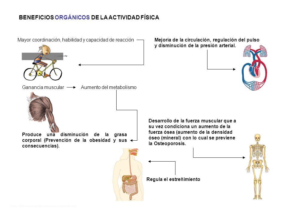 BENEFICIOS ORGÁNICOS DE LA ACTIVIDAD FÍSICA
