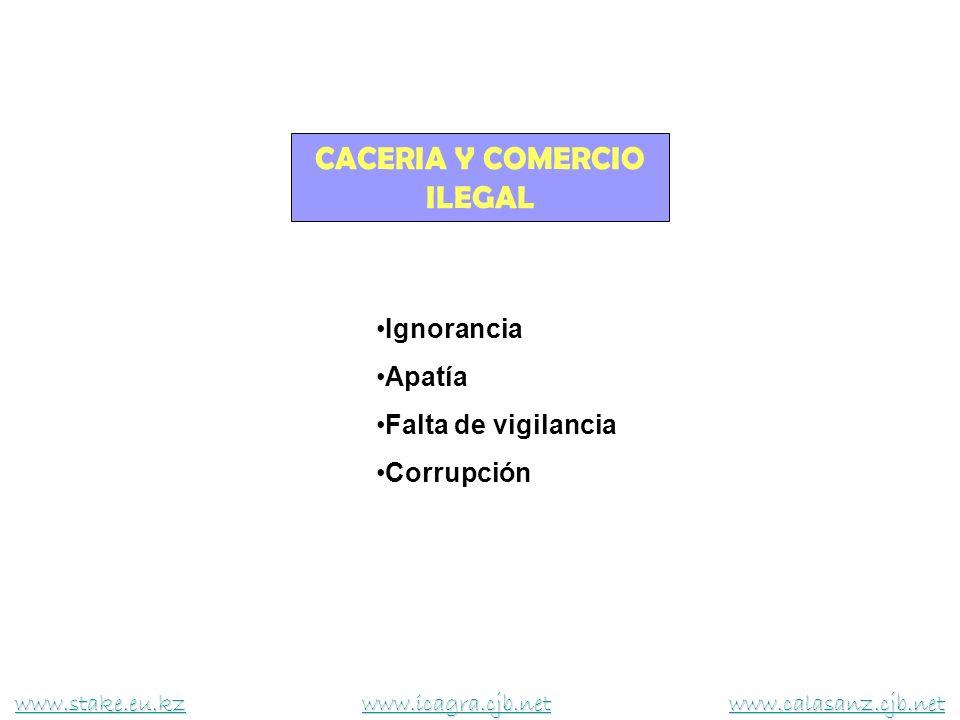 CACERIA Y COMERCIO ILEGAL