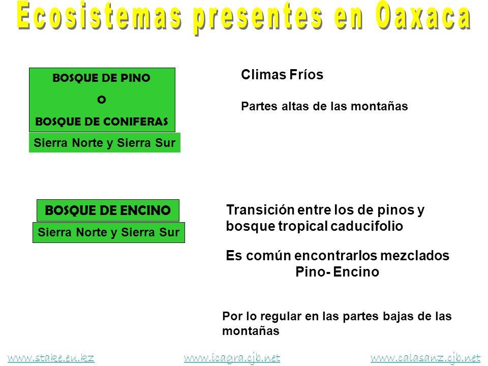 Ecosistemas presentes en Oaxaca