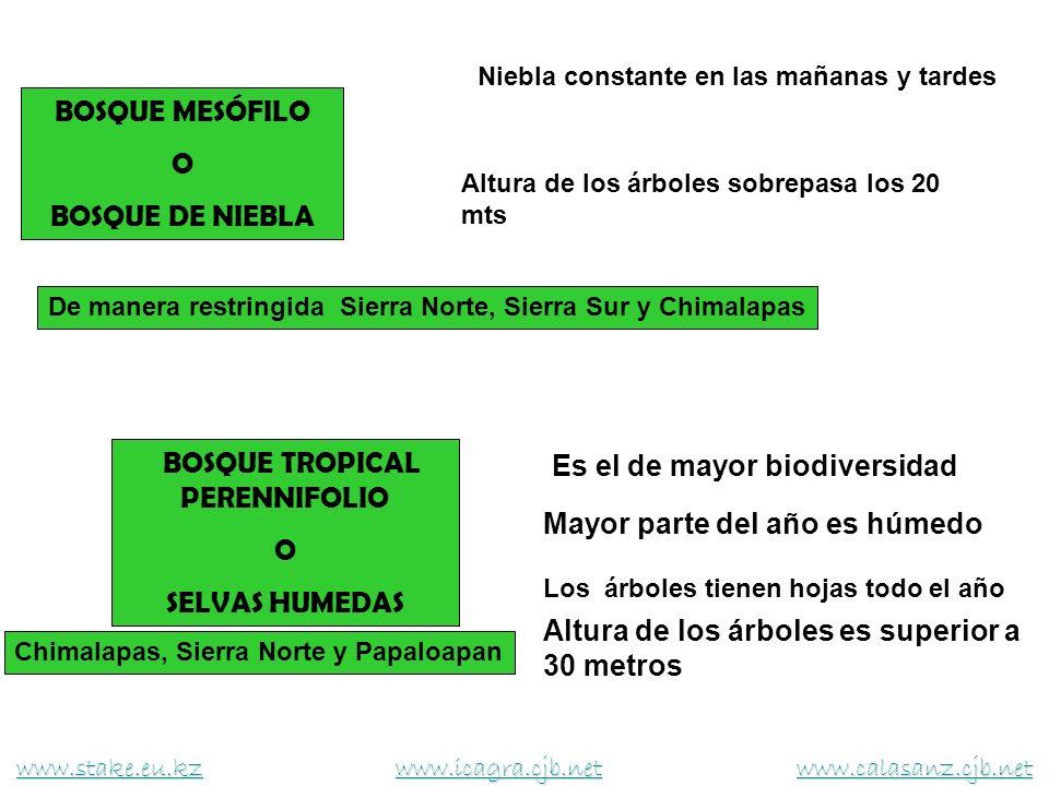 BOSQUE TROPICAL PERENNIFOLIO O SELVAS HUMEDAS