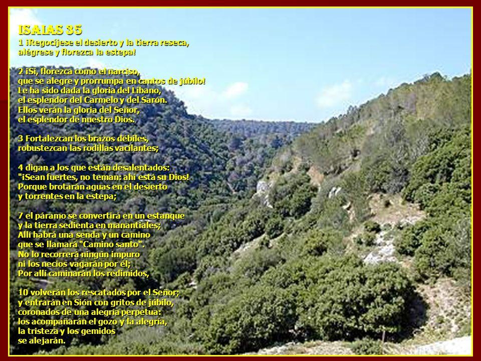ISAIAS 35 1 ¡Regocíjese el desierto y la tierra reseca,