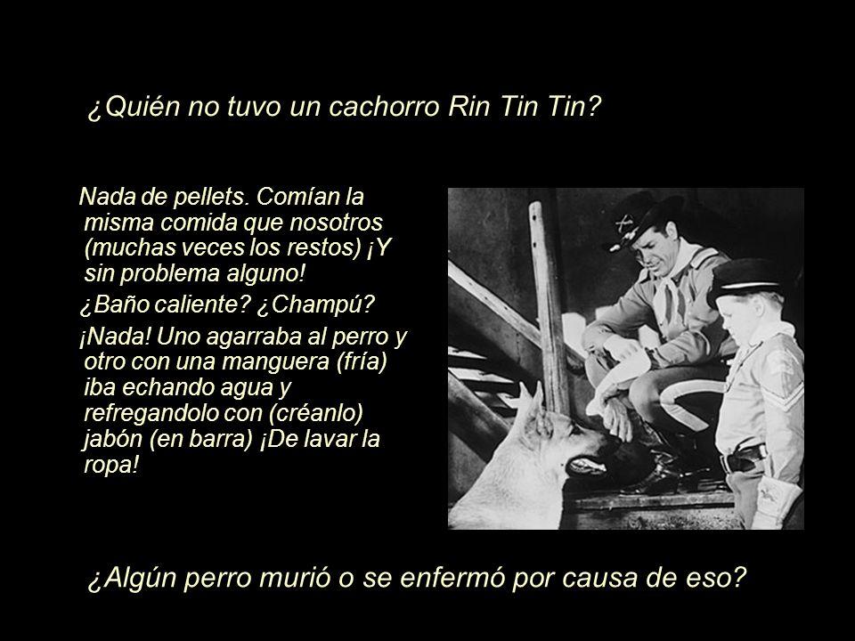 ¿Quién no tuvo un cachorro Rin Tin Tin