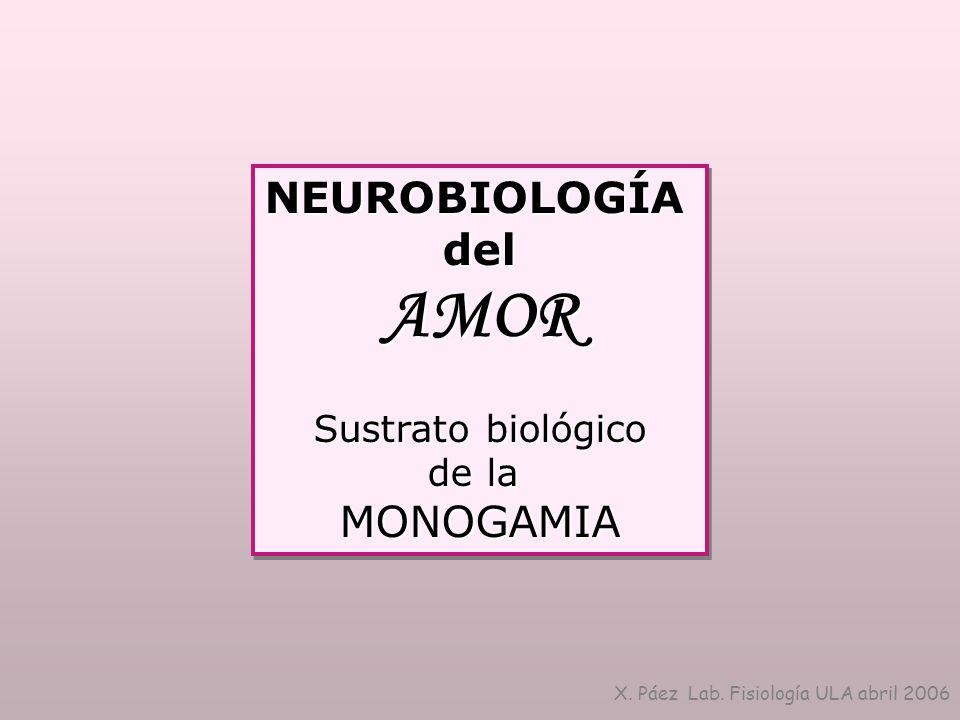 AMOR NEUROBIOLOGÍA del MONOGAMIA Sustrato biológico de la