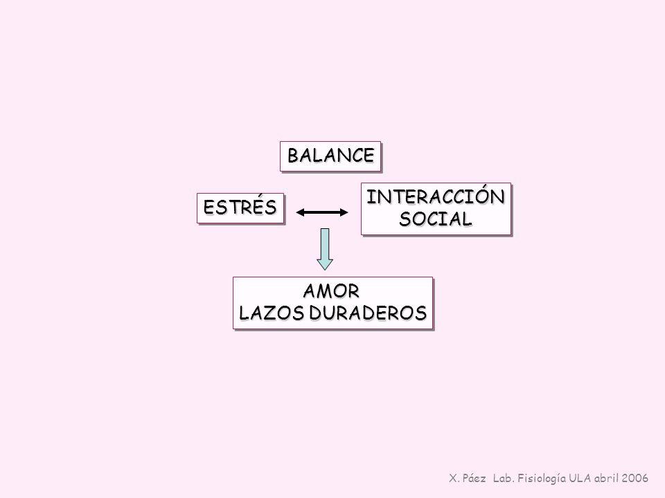 BALANCE INTERACCIÓN ESTRÉS SOCIAL AMOR LAZOS DURADEROS