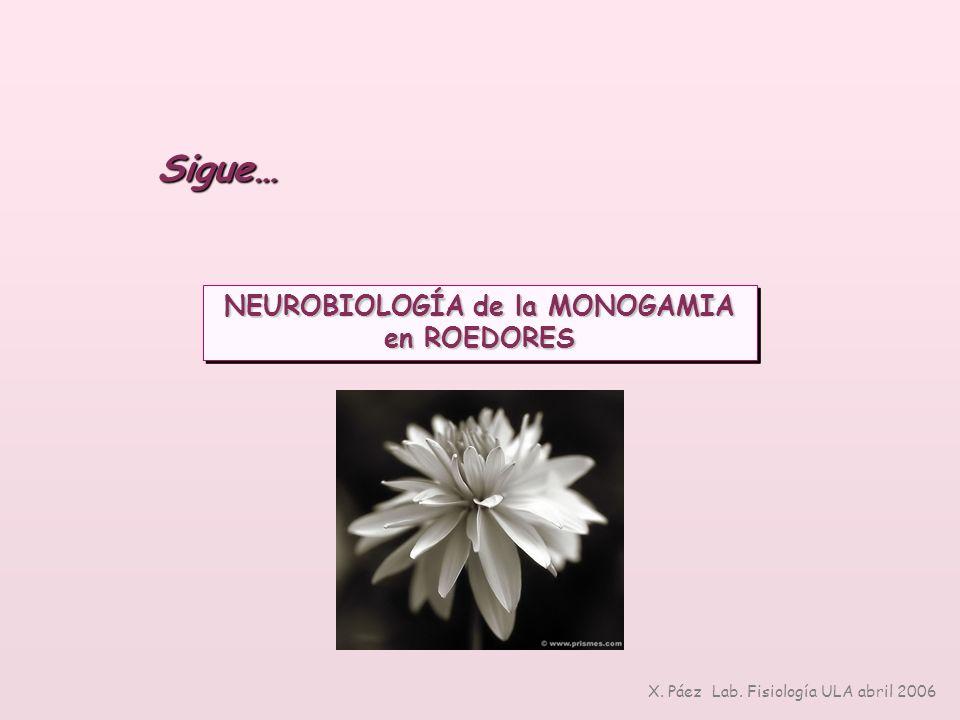 NEUROBIOLOGÍA de la MONOGAMIA