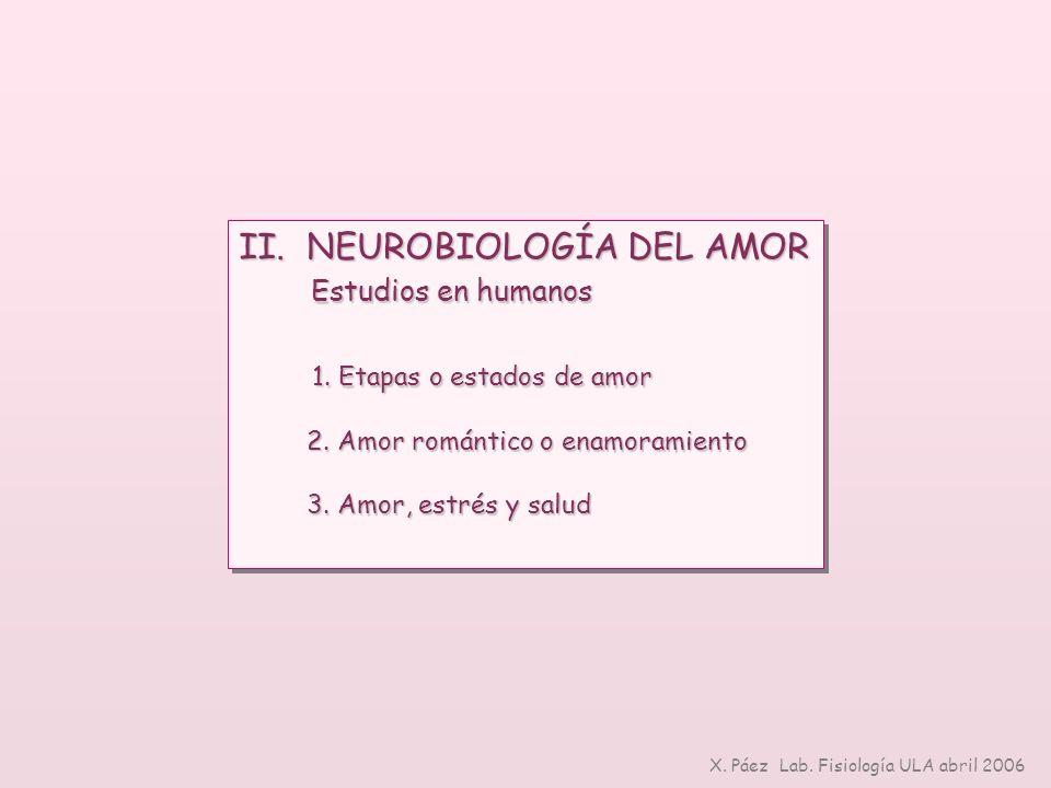 II. NEUROBIOLOGÍA DEL AMOR Estudios en humanos