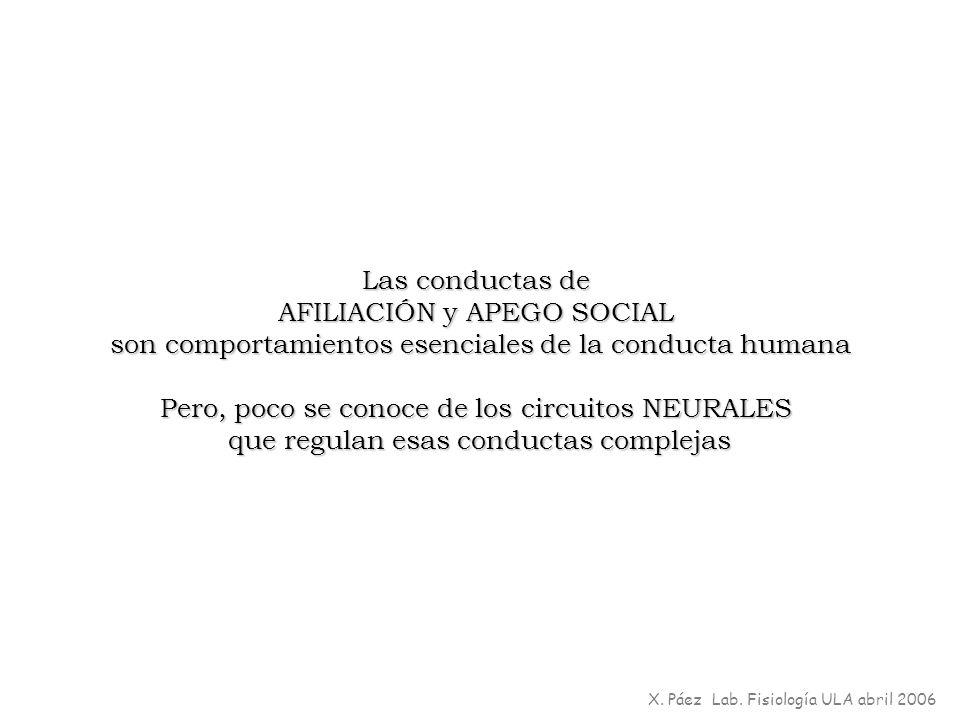 AFILIACIÓN y APEGO SOCIAL