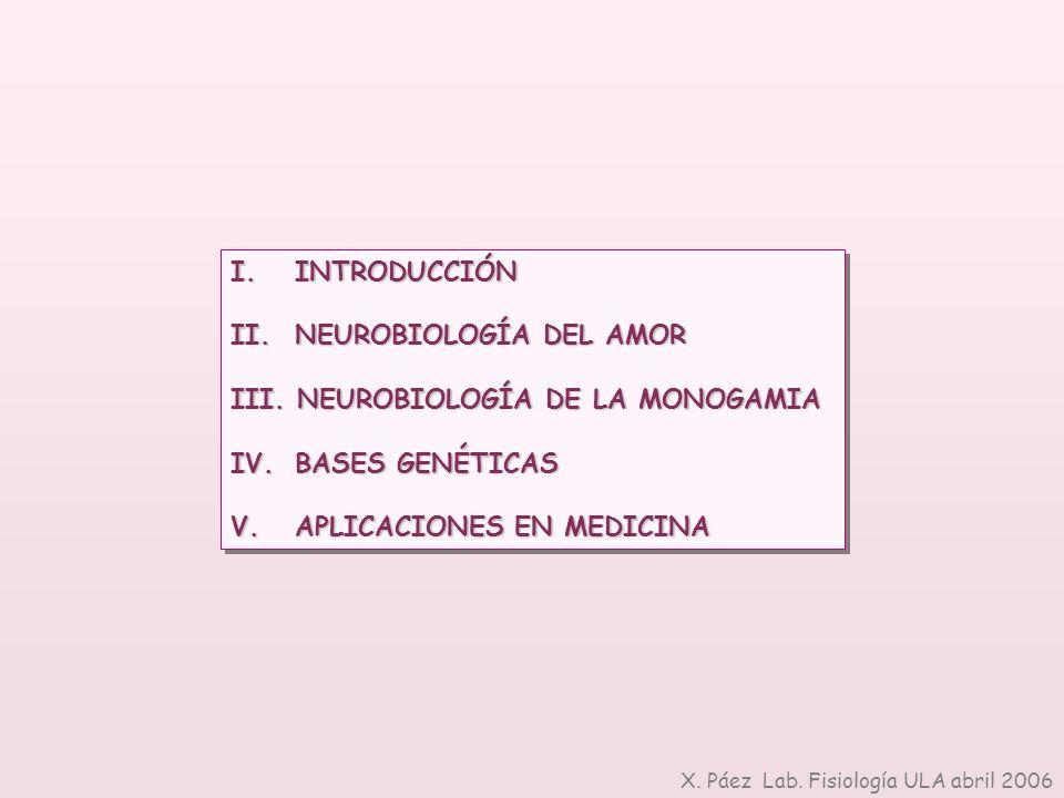 NEUROBIOLOGÍA DEL AMOR NEUROBIOLOGÍA DE LA MONOGAMIA BASES GENÉTICAS