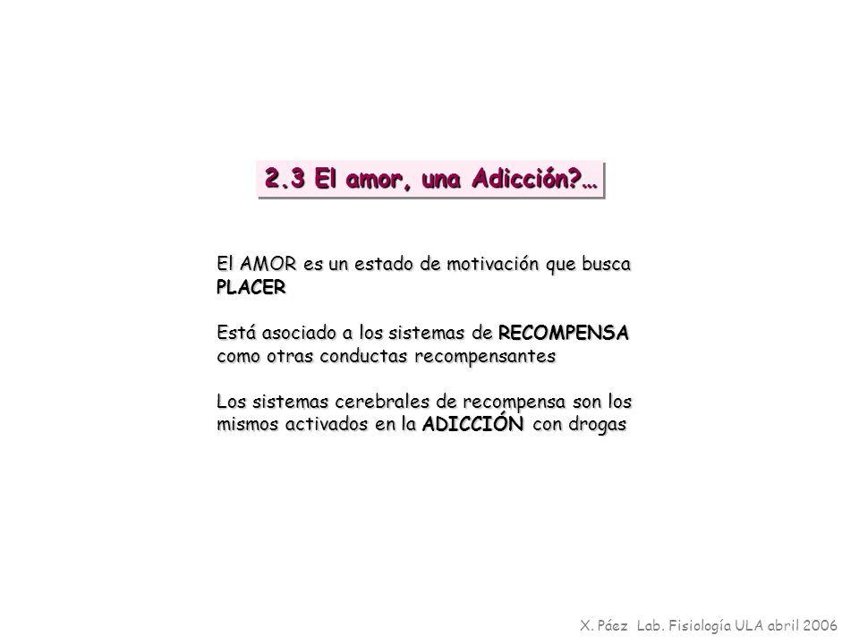 2.3 El amor, una Adicción … El AMOR es un estado de motivación que busca PLACER.