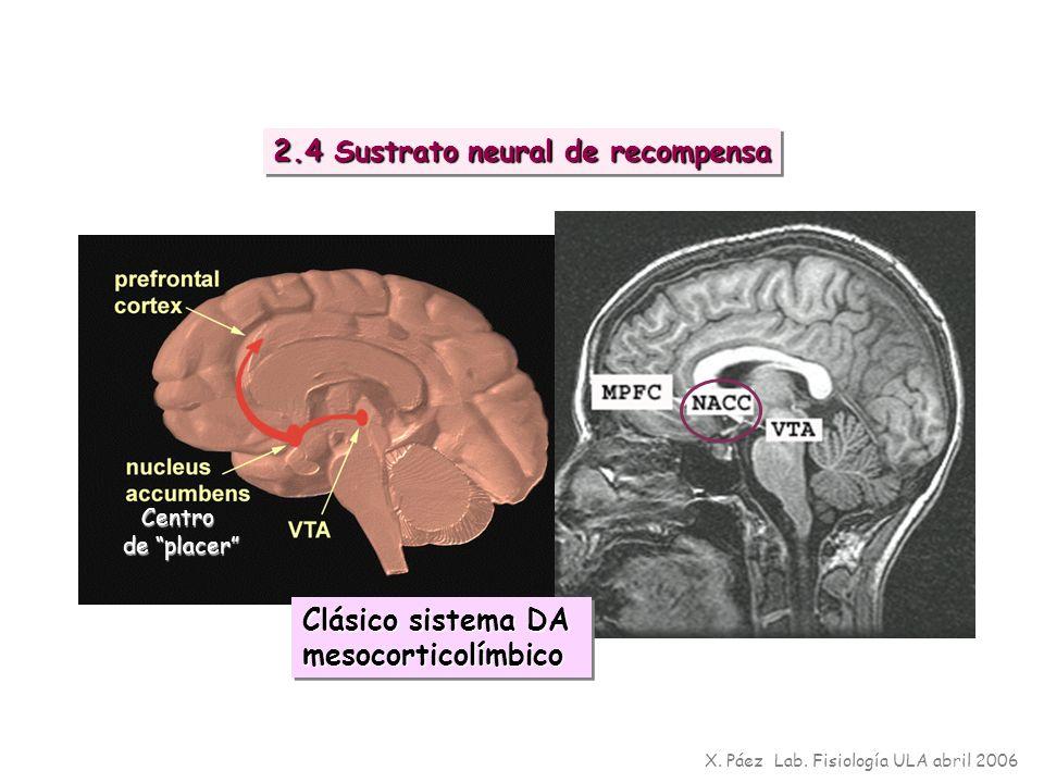 2.4 Sustrato neural de recompensa