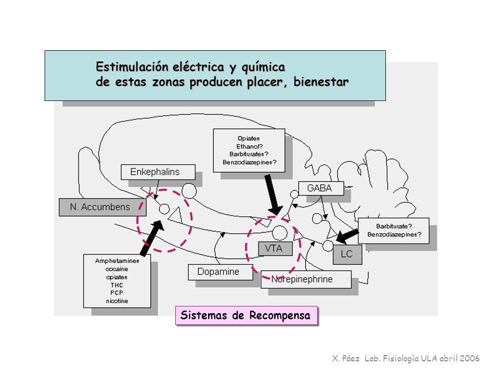 Estimulación eléctrica y química