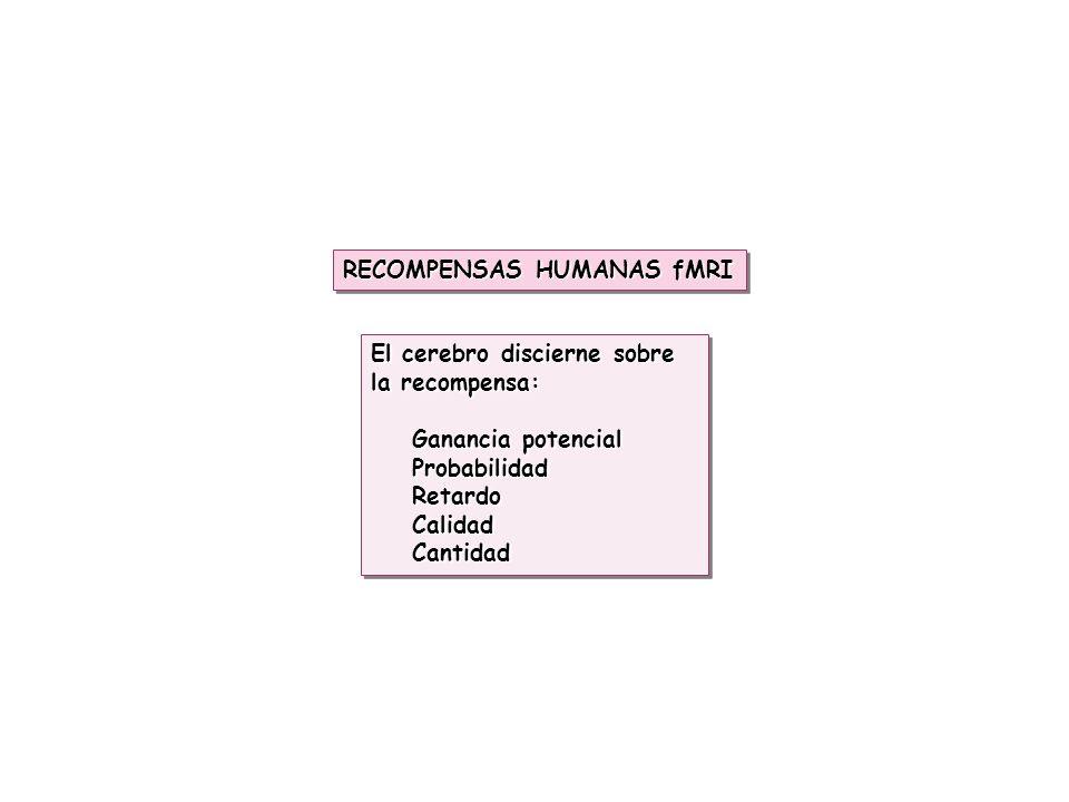 RECOMPENSAS HUMANAS fMRI