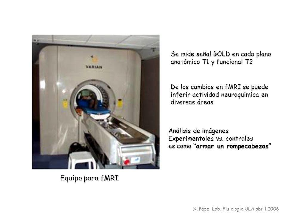 Equipo para fMRI Se mide señal BOLD en cada plano