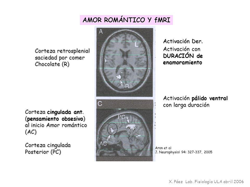 AMOR ROMÁNTICO Y fMRI Activación Der. Activación Der.