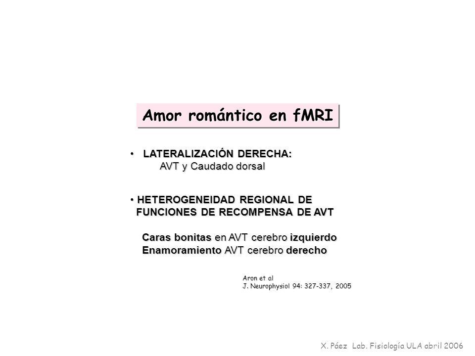 Amor romántico en fMRI LATERALIZACIÓN DERECHA: AVT y Caudado dorsal