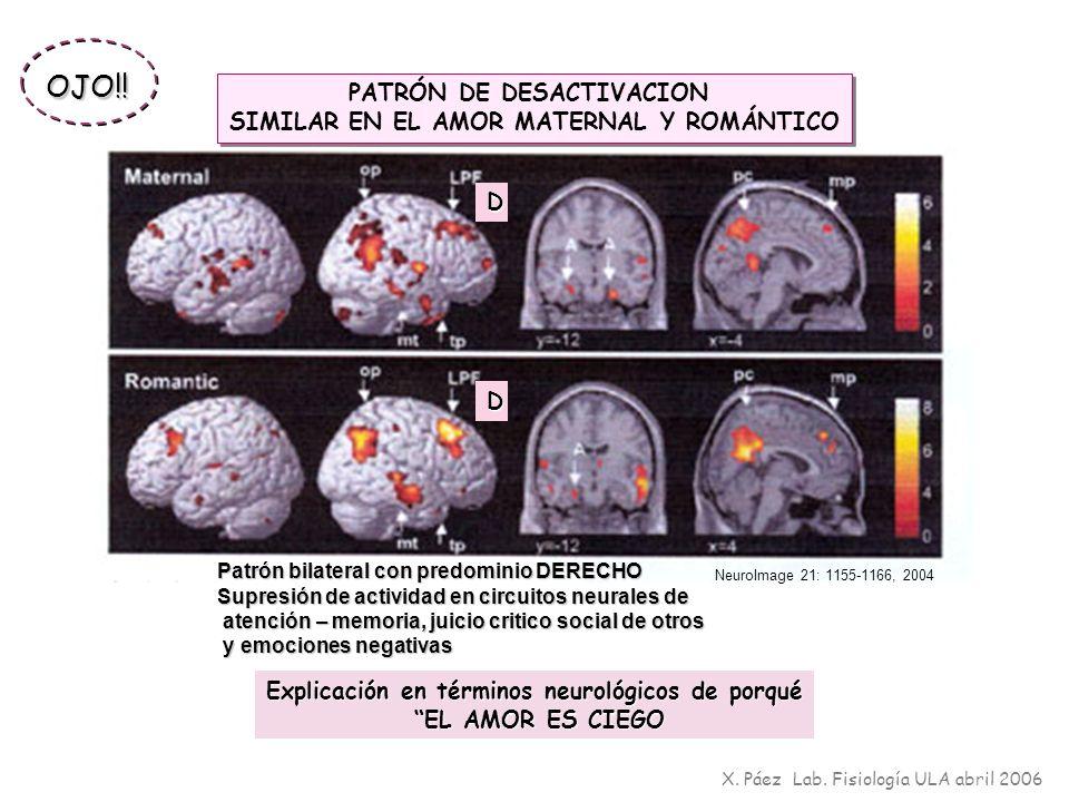 OJO!! PATRÓN DE DESACTIVACION SIMILAR EN EL AMOR MATERNAL Y ROMÁNTICO