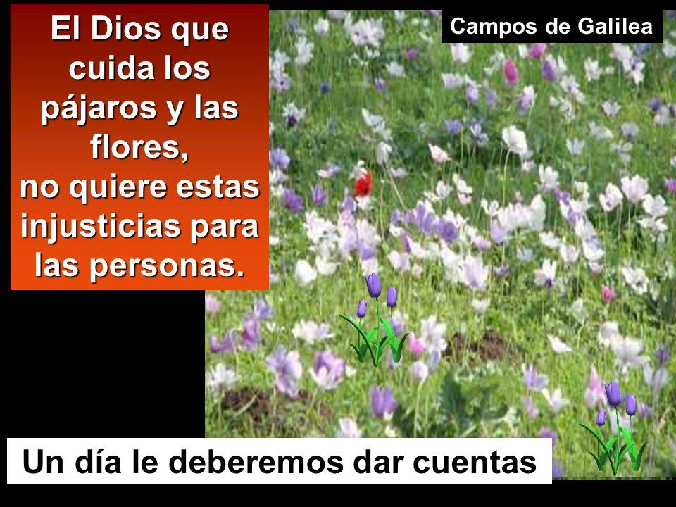 El Dios que cuida los pájaros y las flores,