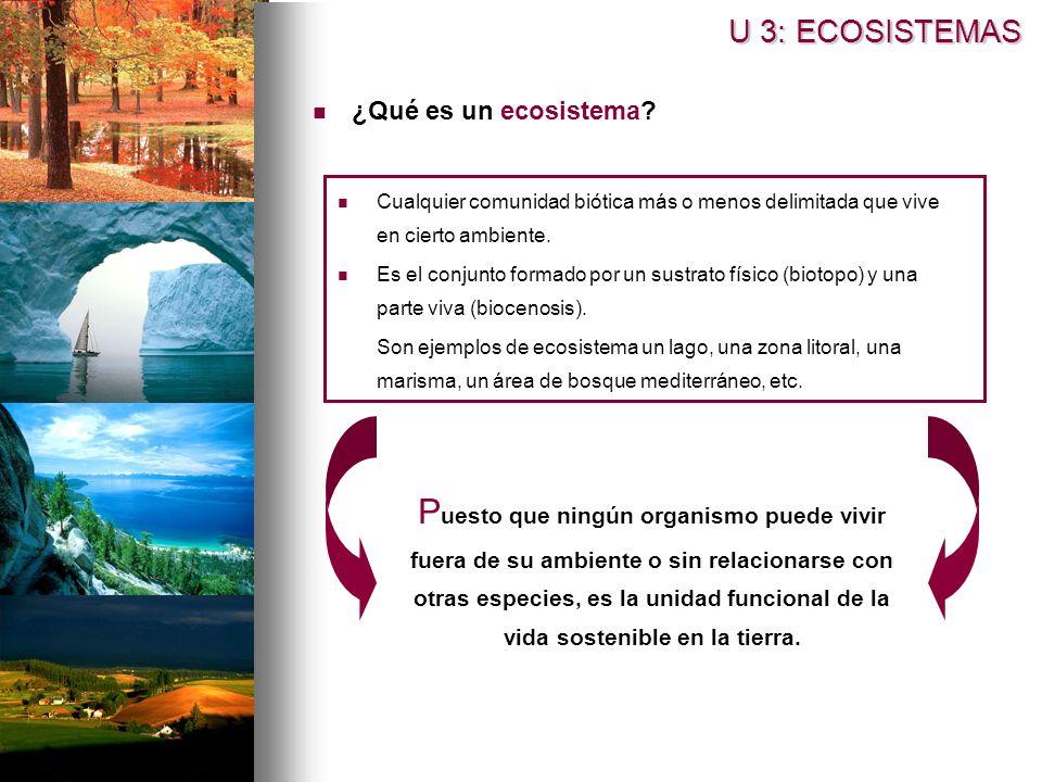 U 3: ECOSISTEMAS ¿Qué es un ecosistema Cualquier comunidad biótica más o menos delimitada que vive en cierto ambiente.