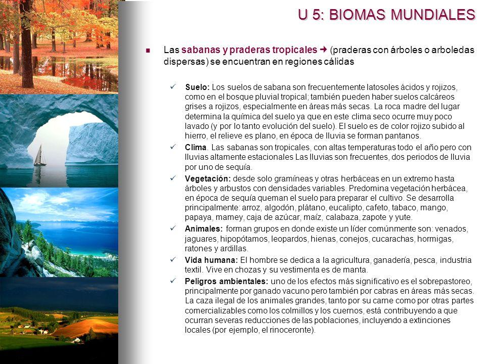 U 5: BIOMAS MUNDIALES Las sabanas y praderas tropicales  (praderas con árboles o arboledas dispersas) se encuentran en regiones cálidas.