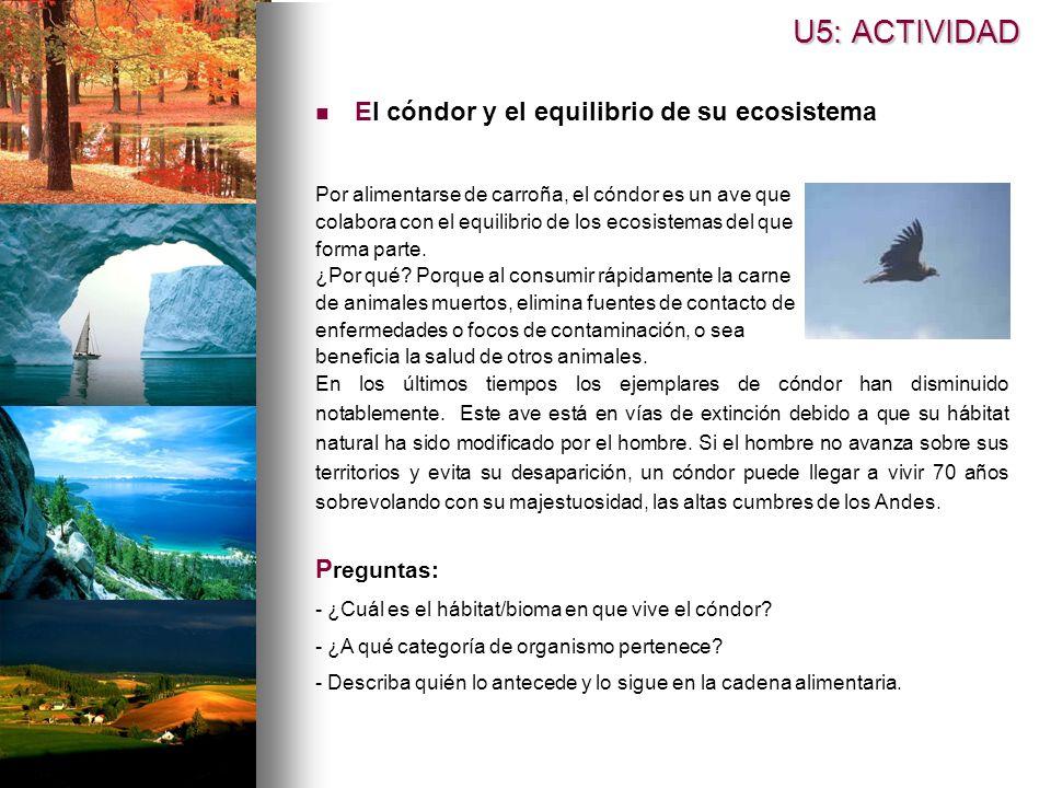 U5: ACTIVIDAD El cóndor y el equilibrio de su ecosistema Preguntas: