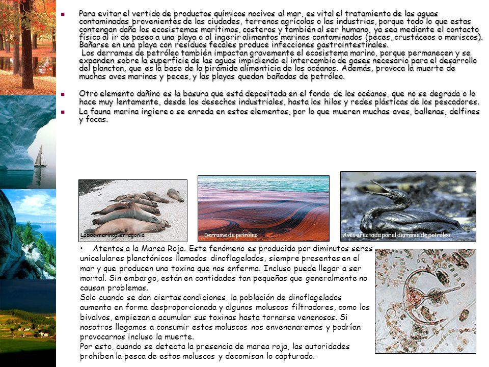 Para evitar el vertido de productos químicos nocivos al mar, es vital el tratamiento de las aguas contaminadas provenientes de las ciudades, terrenos agrícolas o las industrias, porque todo lo que estas contengan daña los ecosistemas marítimos, costeros y también al ser humano, ya sea mediante el contacto físico al ir de paseo a una playa o al ingerir alimentos marinos contaminados (peces, crustáceos o mariscos). Bañarse en una playa con residuos fecales produce infecciones gastrointestinales. Los derrames de petróleo también impactan gravemente el ecosistema marino, porque permanecen y se expanden sobre la superficie de las aguas impidiendo el intercambio de gases necesario para el desarrollo del plancton, que es la base de la pirámide alimenticia de los océanos. Además, provoca la muerte de muchas aves marinas y peces, y las playas quedan bañadas de petróleo.