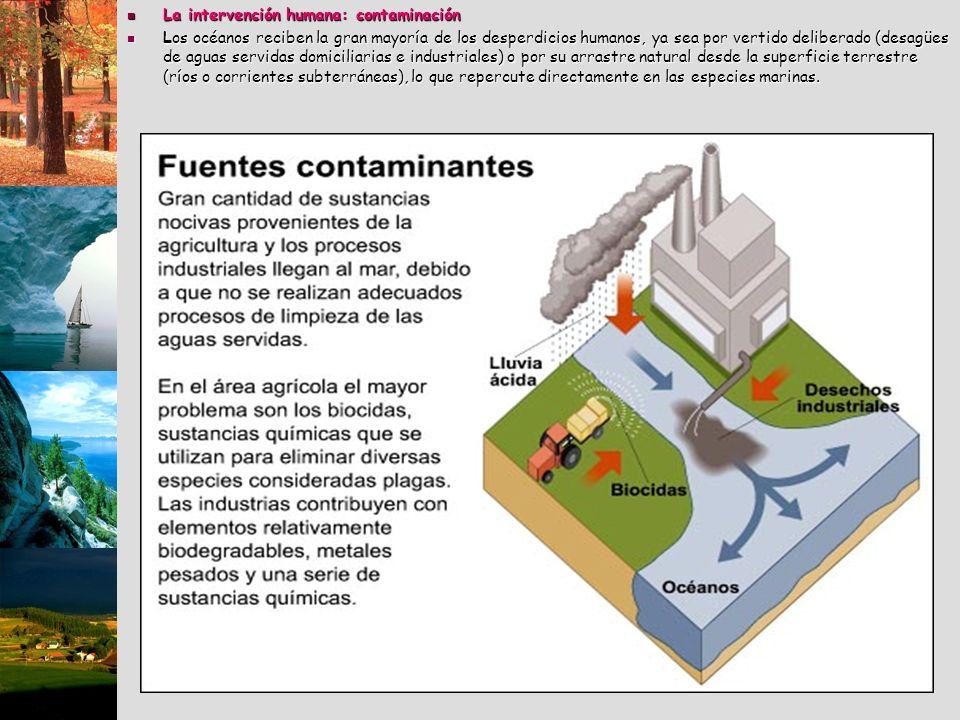 La intervención humana: contaminación