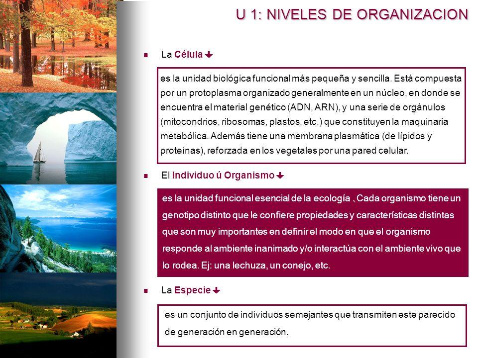 U 1: NIVELES DE ORGANIZACION