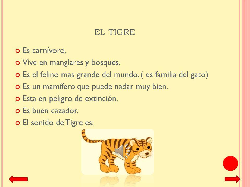 el tigre Es carnívoro. Vive en manglares y bosques.
